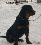 Irco_9